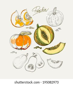 Vector drawing of beautiful colorful pumpkins