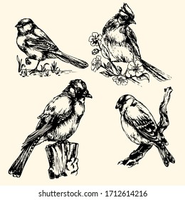 vector drawing of a bird: Jay and tit