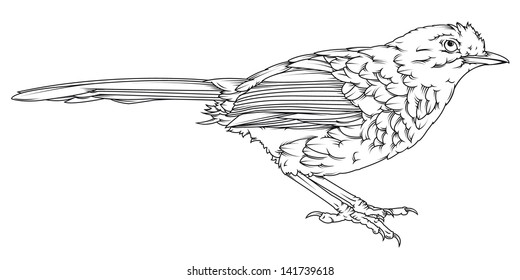 Vector drawing bird line drawing little bird line drawing easy to edit isolated line