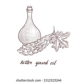 vector drawing bitter gourd oil, bottle of vegetable oil and Momordica charantia, hand drawn illustration