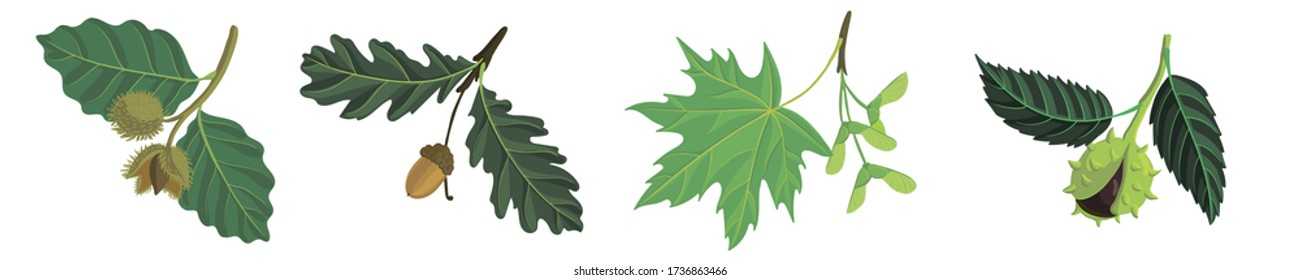 vector drawing branches of trees with leaves, oak, beech, maple and chestnut, hand drawn illustration