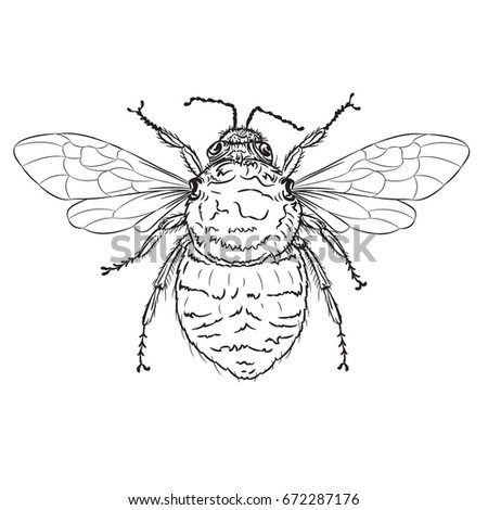 Vector Drawing Bumble Bee Line Art Stock Vector Royalty Free
