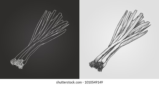 Vector drawing of a bunch of calçots. Scallions.
