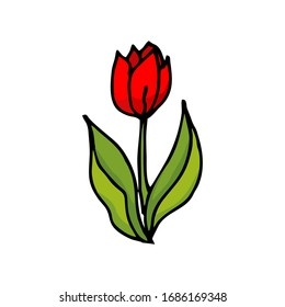 Vector drawing by hand of an isolated Tulip. Doodle. Color drawing on a white background with an outline.