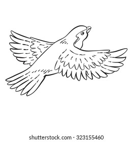Vector drawing of a / Cartoon Bird Line Drawing / Easy to edit layers and groups. Easy to add colour to white object shapes.