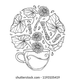 Vector drawing of contour cup of Tussilago farfara or coltsfoot herbal tea with leaves and flower in black isolated on white background. Coltsfoot outline bunch for medicinal design or coloring book.