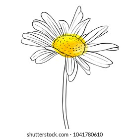 vector drawing daisy flower, floral element, hand drawn botanical illustration