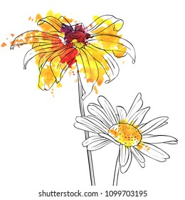 vector drawing daisy flowers, floral background, hand drawn botanical illustration