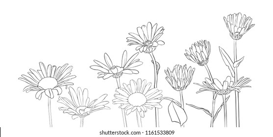 vector drawing daisy flowers, floral composition, hand drawn botanical illustration