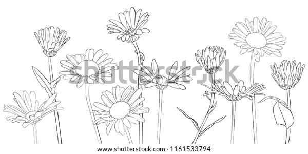 Image Vectorielle De Stock De Image Vectorielle Dessin Fleurs De Marguerite 1161533794