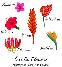 vector drawing exotic tropical flowers isolated at white background, hand drawn illustration