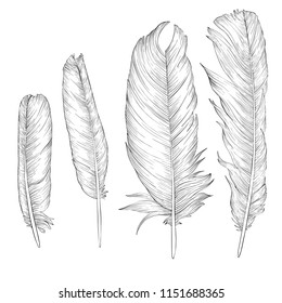 vector drawing feathers, hand drawn illustration