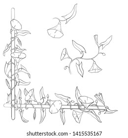 vector drawing floral element with bindweed flowers and leaves, hand drawn illustration