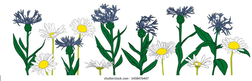 vector drawing flowers, blue cornflowers and daisies, floral composition, hand drawn art illustration