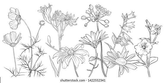 vector drawing flowers, floral composition, hand drawn illustration