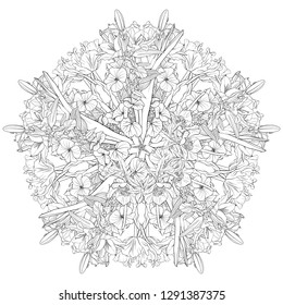 vector drawing flowers, floral mandala, decorative rosette, stylized design round template, isolated floral element, hand drawn botanical illustration