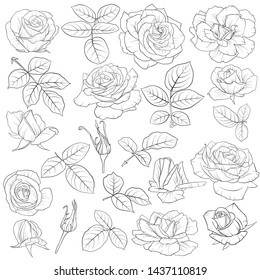 vector drawing flowers and leaves of roses, isolated floral elements, hand drawn botanical illustration