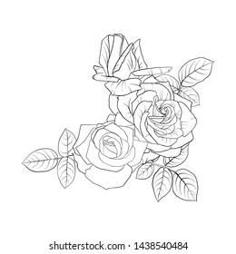 vector drawing flowers and leaves of roses, isolated floral composition, hand drawn botanical illustration