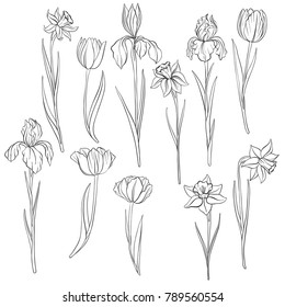 Iris Drawing High Res Stock Images Shutterstock