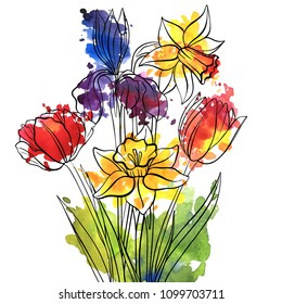 vector drawing flowers of tulips and narcissus, isolated floral element, hand drawn illustration