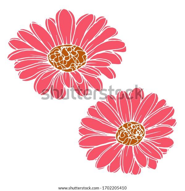 Vector drawing of gerbera flowers. Nature. Sketch, illustration.