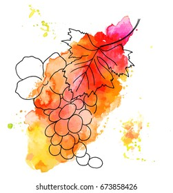 A vector drawing of a grape vine with a leaf and a rose that indicates the healthiness of the plant, on a vibrant watercolor stain. Wine-related decorative design element, isolated on white background