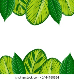 vector drawing green palm leaves, natural background, botanical illustration, hand drawn floral jungle template