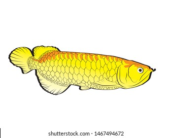 vector drawing illustration golden arowana.