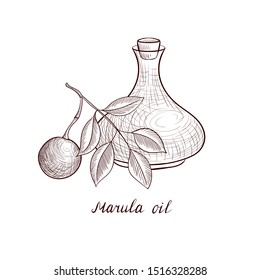 vector drawing marula oil, bottle of vegetable oil and Sclerocarya birrea branch, hand drawn illustration