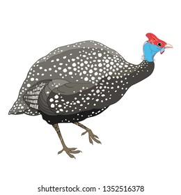 Vector drawing of outline Guinea fowl isolated on white background. Outline wild or poultry bird Guineafowl in contour style.