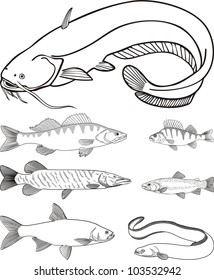 vector drawing predatory freshwater fish, catfish, zander, perch, pike, trout, eel, asp