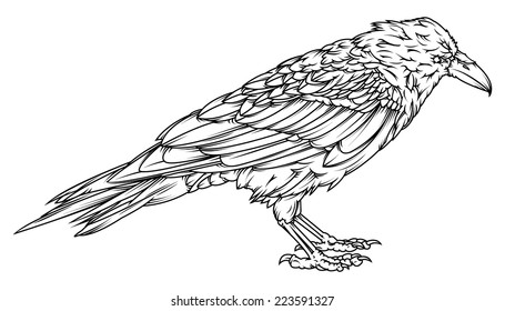 Vector drawing of a /Raven outline/ Easy to edit vector file, color version available in portfolio
