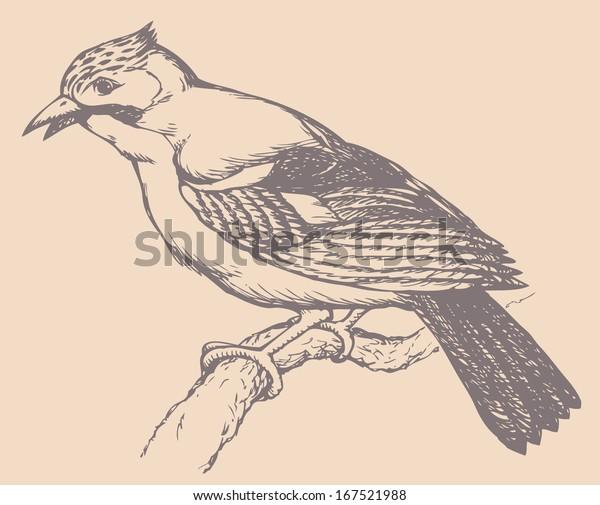 Vector Drawing Series Birds Jays Several Stock Vector