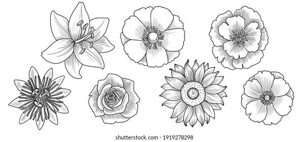 vector drawing set of vintage flowers, hand drawn illustration