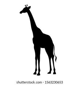 vector drawing silhouette of a giraffe ink