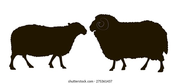 vector drawing silhouettes of male and female sheep