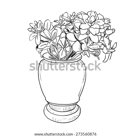 Vector Drawing Sketch Vase Flowers Hand Stock Vector Royalty Free