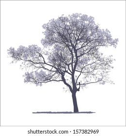 vector drawing of the tree - detailed vector