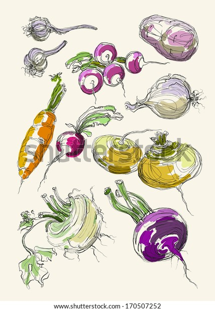 Vector drawing vegetables set