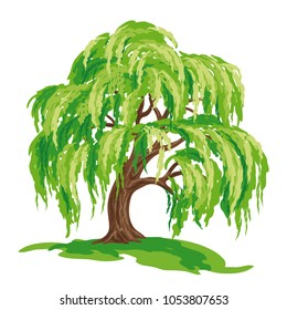 Vector drawing of willow tree. EPS8