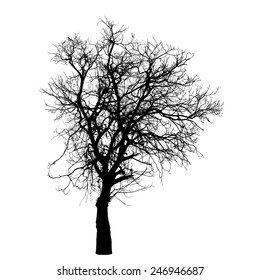 Vector drawing of the winter tree
