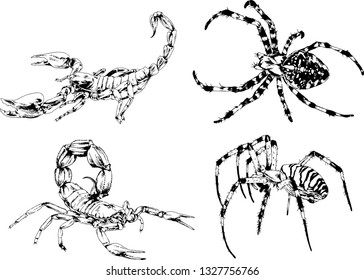 Desert Scorpion Stock Vectors Images Vector Art Shutterstock