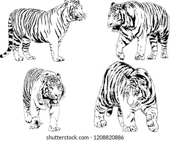 vector drawings sketches different predator 260nw 1208820886 lion sketch images, stock photos & vectors shutterstock