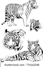 Nice Vector Drawings Sketches Different Predator , Tigers Lions Cheetahs And  Leopards Are Drawn In Ink By