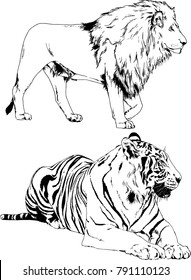 lion sketch images stock photos vectors shutterstock African Lion Food Web Diagram vector drawings sketches different predator tigers lions cheetahs and leopards are drawn in ink by