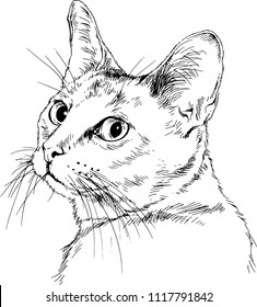 Vector drawings sketches head of a cat hand are drawn in ink by hand , objects with no background logo, tattoo