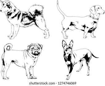 vector drawings sketches pedigree dogs in the racks drawn in ink by hand , objects with no background