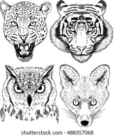 Vector Drawings of Wild Animal Faces Set Leopard , Tiger, Owl, Fox