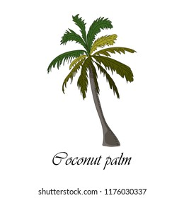 Vector drawn coconut palm tree on white background in a sketch style. Exotic collection.