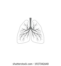 Vector drawn human lungs. Isolated on grey background.